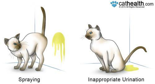how to stop cat spraying